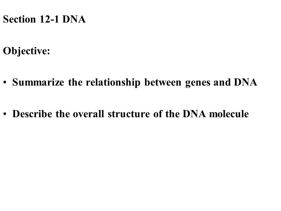 summarize the relationship between genes and dna