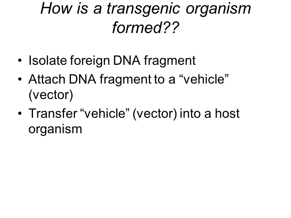 How is a transgenic organism formed
