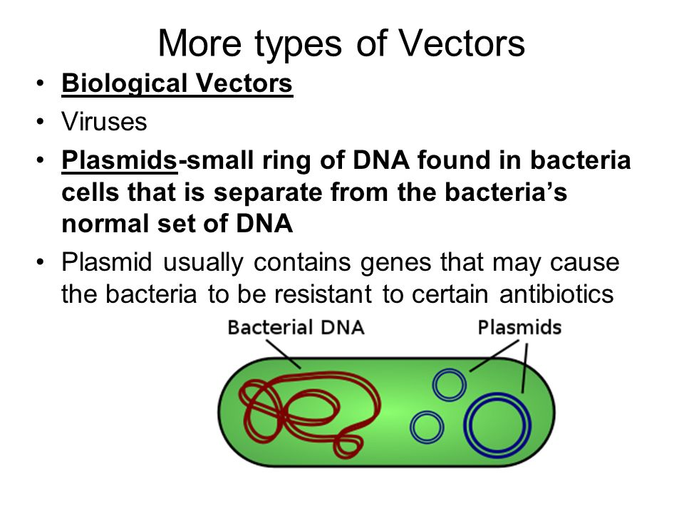 More types of Vectors Biological Vectors Viruses
