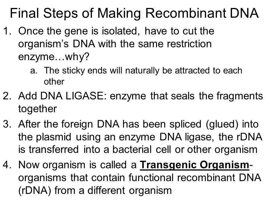Final Steps of Making Recombinant DNA
