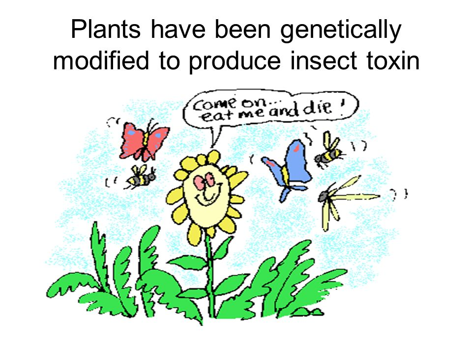 Plants have been genetically modified to produce insect toxin