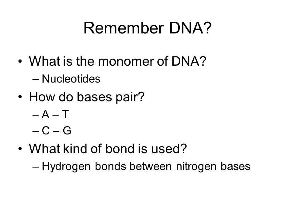 Remember DNA What is the monomer of DNA How do bases pair