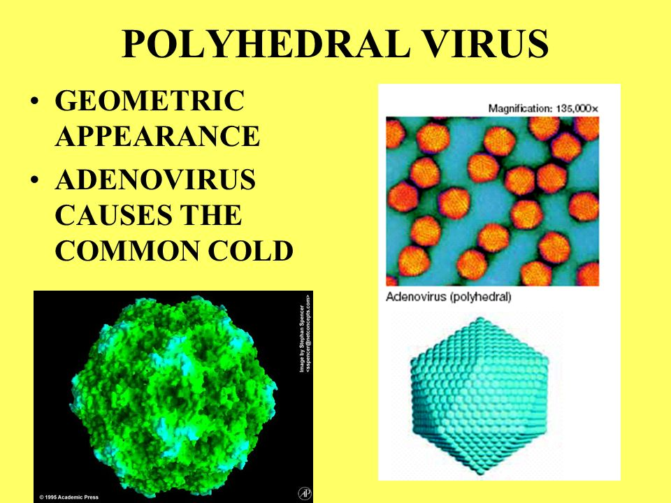 POLYHEDRAL VIRUS GEOMETRIC APPEARANCE