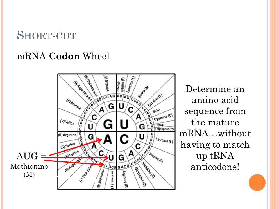 Codon wheel worksheet answer key
