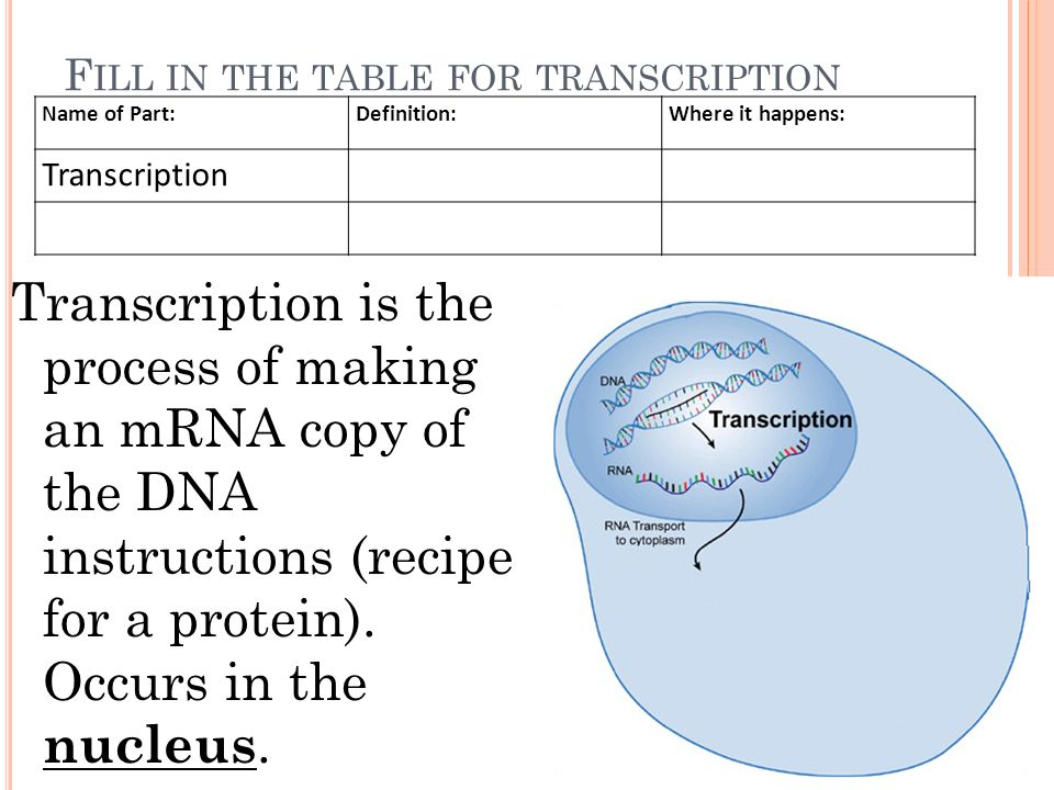 Protein synthesis ppt video online download 6 fill ccuart Choice Image