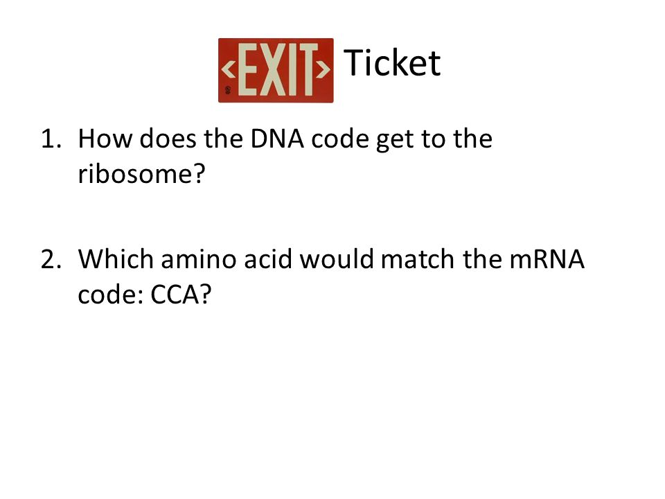 Ticket How does the DNA code get to the ribosome