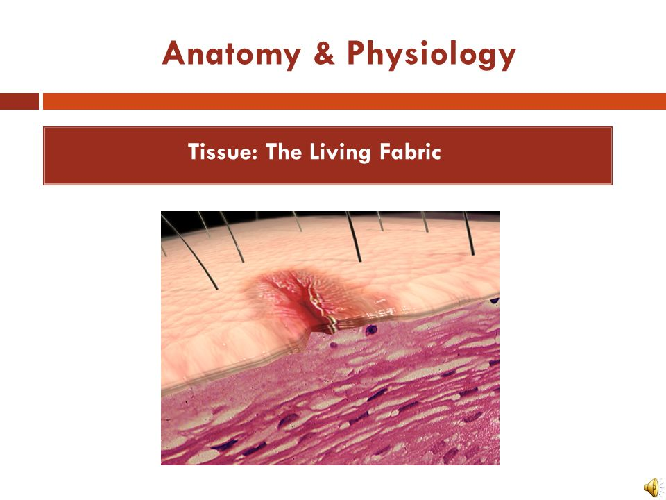 Anatomy & Physiology Tissue: The Living Fabric. - ppt download
