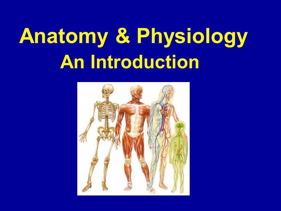 Berühmt Zweige Der Anatomie Und Physiologie Fotos - Anatomie und ...