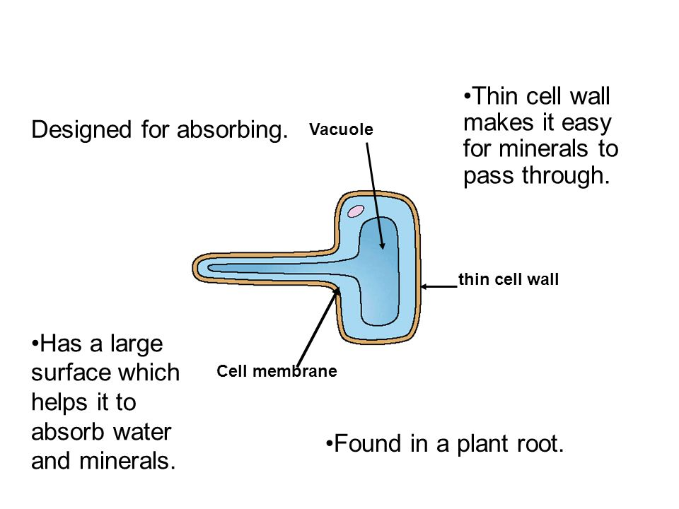 Cells organs tissues lessons ppt video online download 47 root ccuart Choice Image