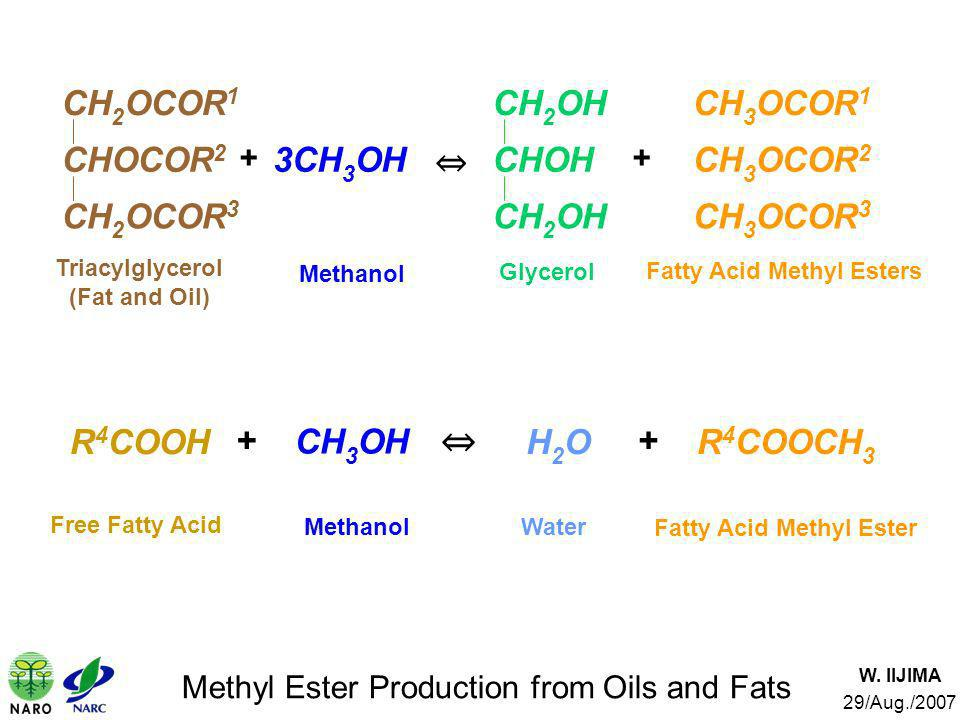 Methyl Ester Production from Oils and Fats