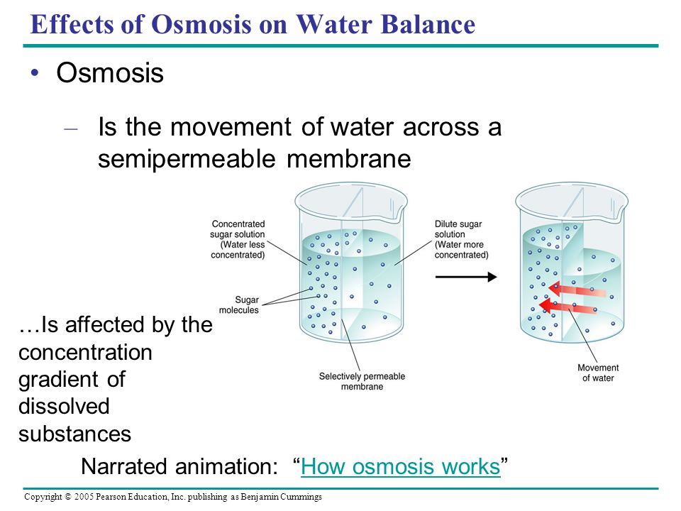 Osmosis and Diffusion Lab Essay Sample
