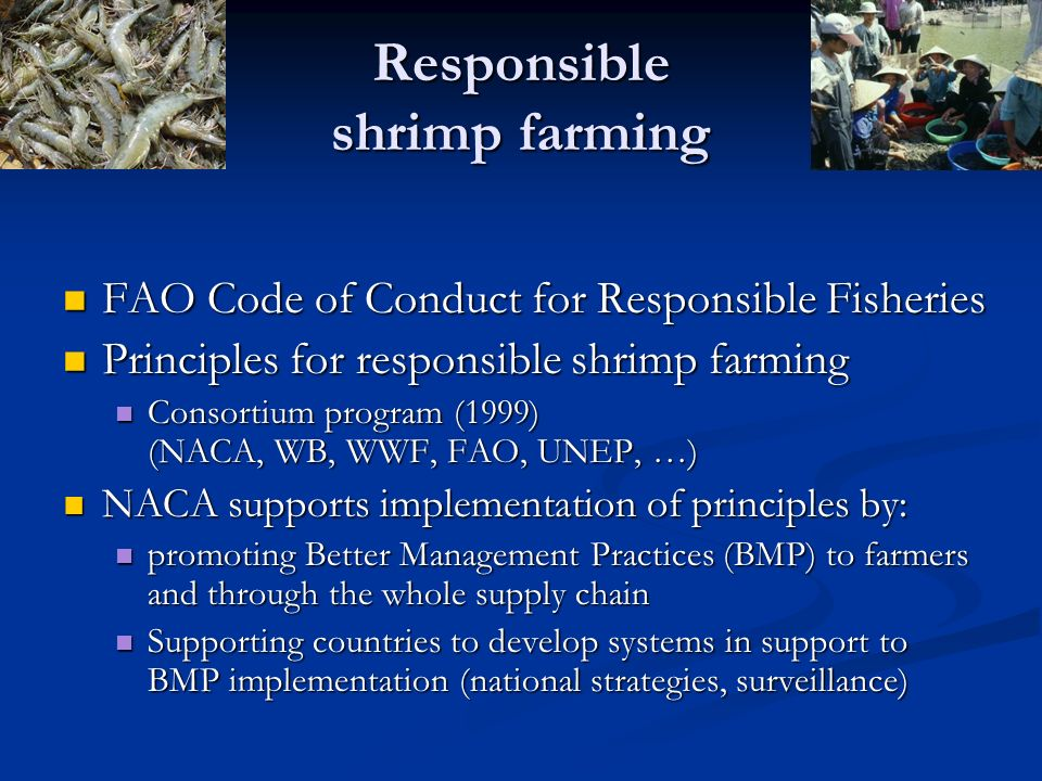Responsible shrimp farming