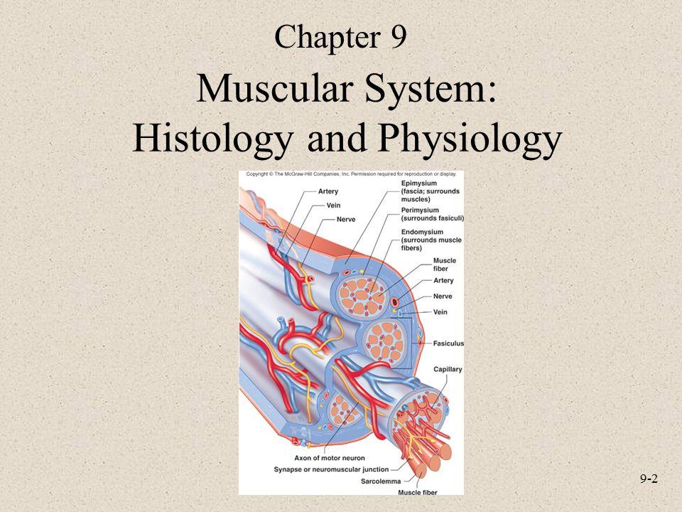Gemütlich Anatomy And Physiology Edition 9 Fotos - Menschliche ...