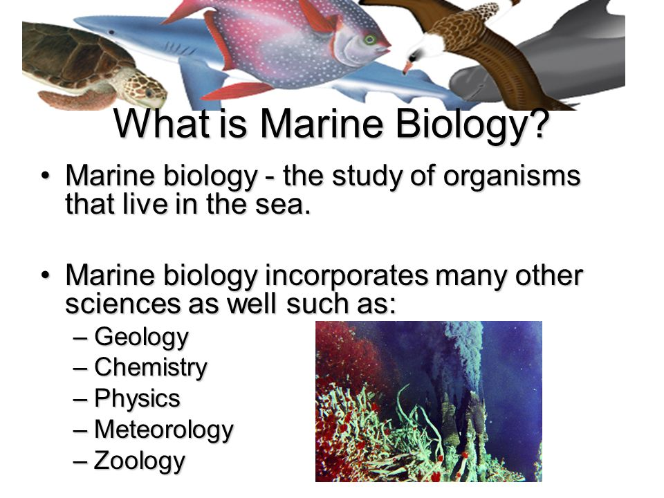 an introduction to the analysis of marine biology Fall semester at the duke marine lab  speciation, molecular evolution, phylogenetic analysis  introduction to marine conservation biology emphasizing.