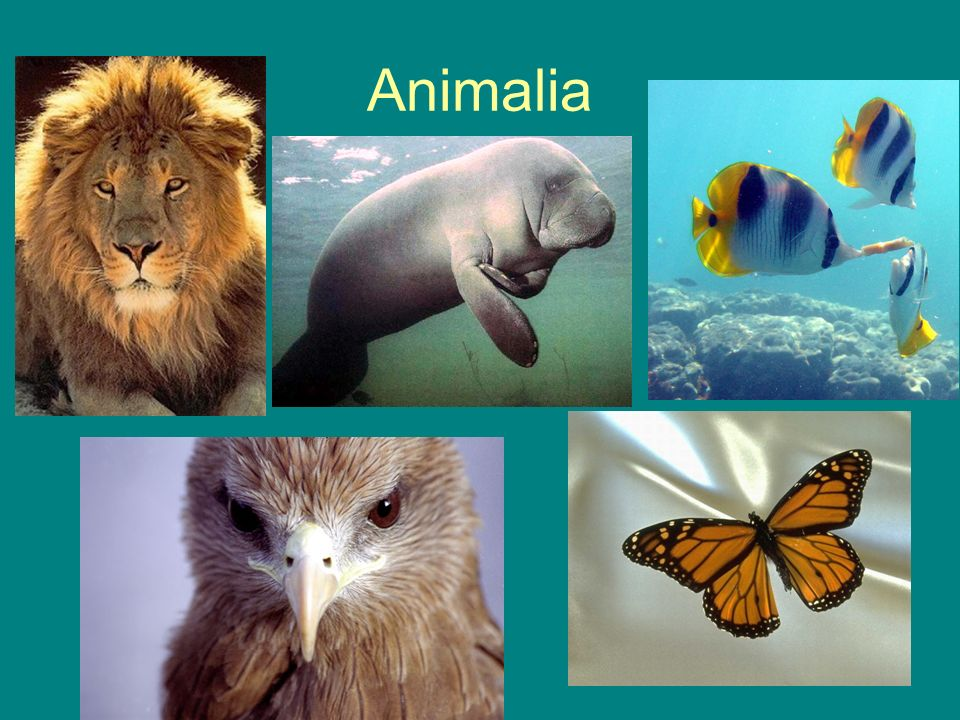 Phylum Mollusca Examples