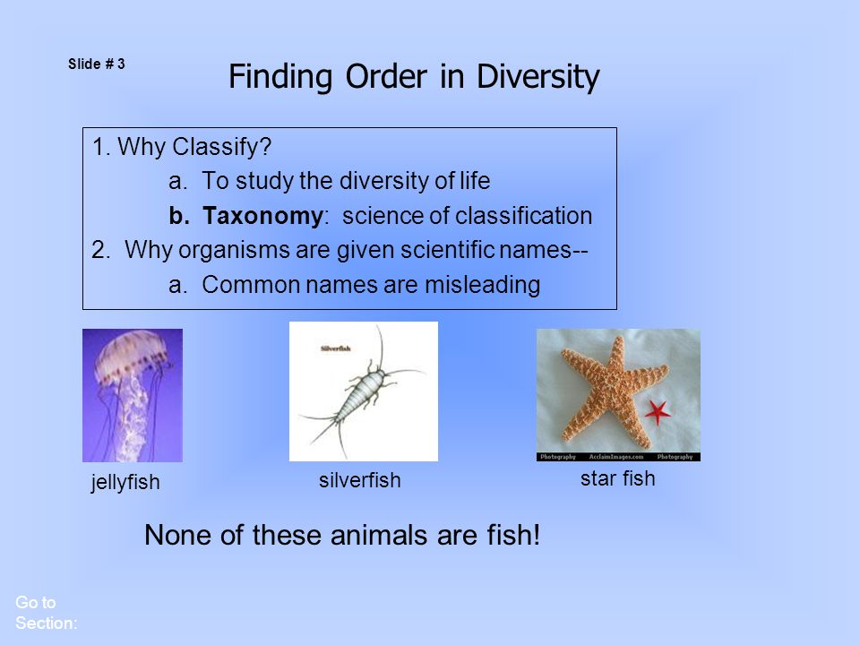 an analysis of the scientific classification of order and genus King philip couldn't order five good sandwiches (mnemonic for taxonomy order: kingdom, phylum, class, order, family, genus, species) kpcofgs king phillip came over for good sex (mnemonic for taxonomy order: kingdom, phylum, class, order, family, genus, species.