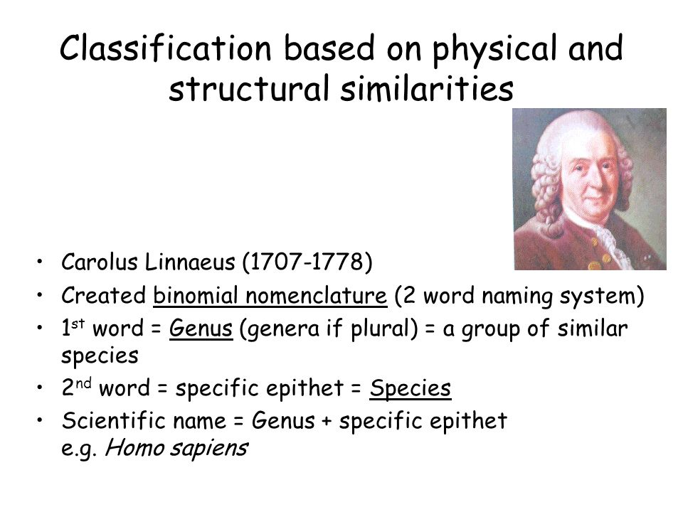 Classification based on physical and structural similarities