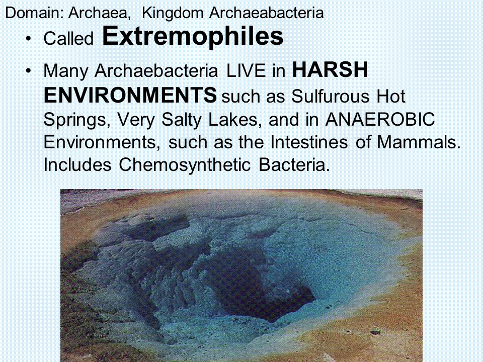 Archaebacteria Environments