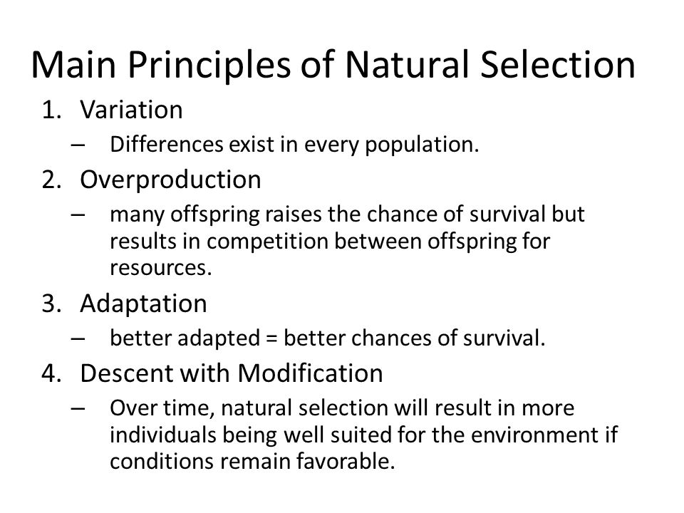 Main Principles of Natural Selection