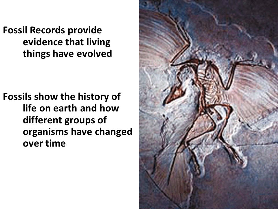 Fossil Records provide evidence that living things have evolved