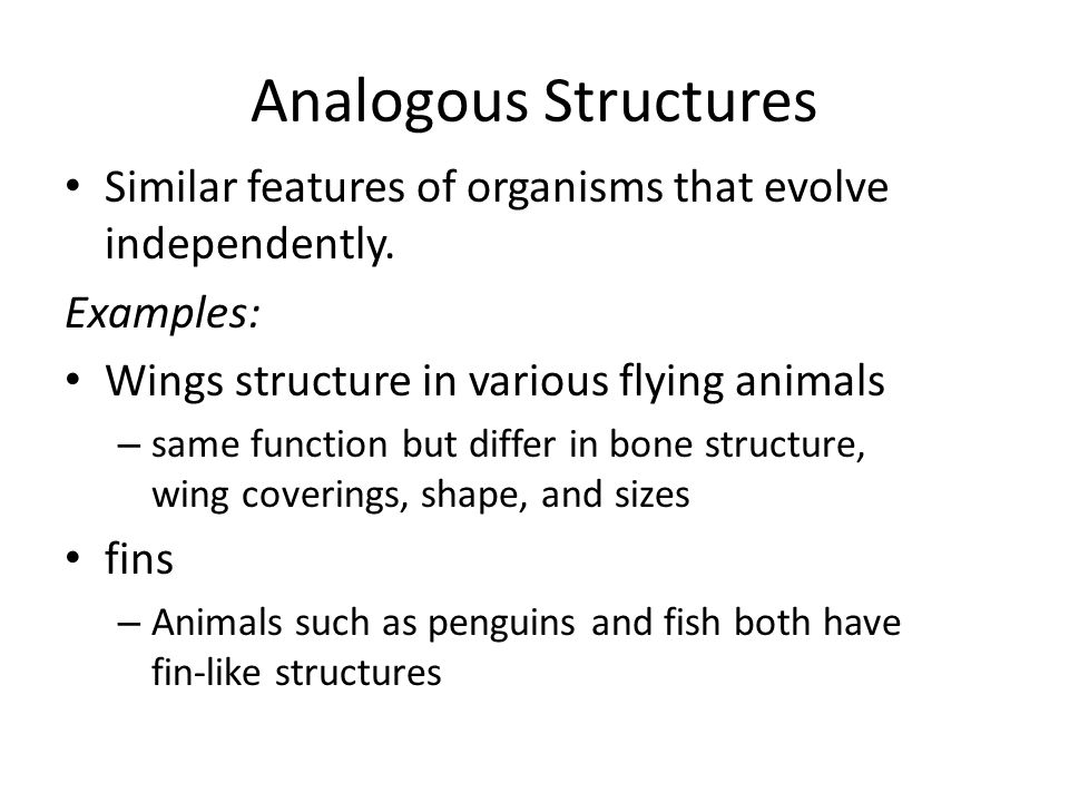 Analogous Structures Similar features of organisms that evolve independently. Examples: Wings structure in various flying animals.