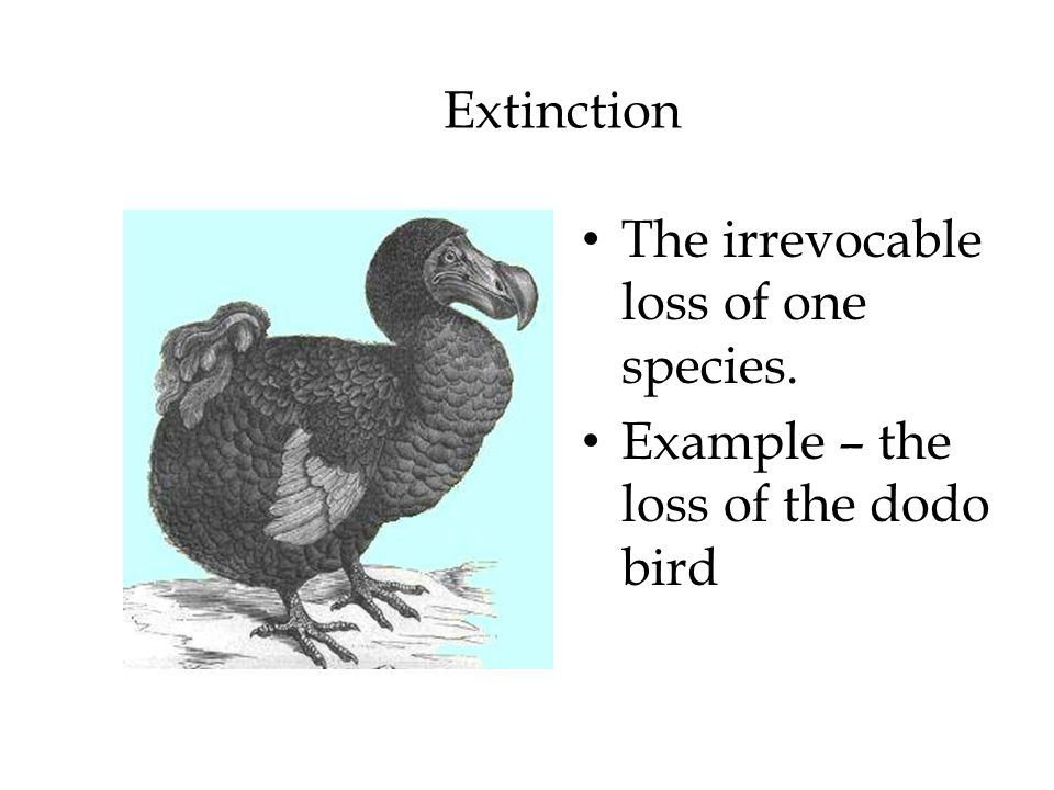 Extinction The irrevocable loss of one species. Example – the loss of the dodo bird