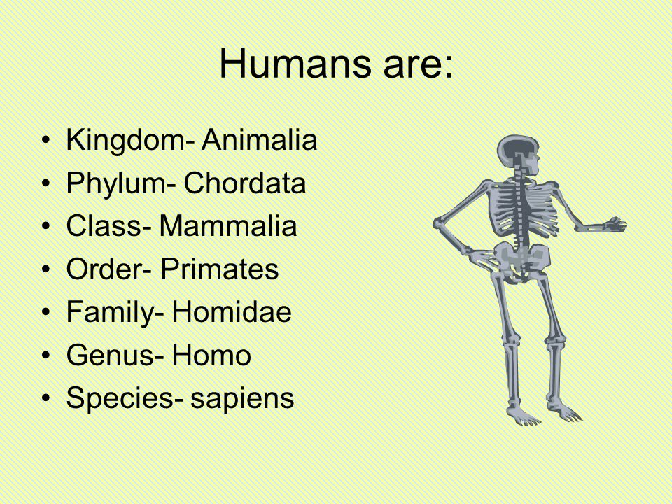 the taxonomy of three homo species Classification, or taxonomy, is a system of categorizing living things  are seven divisions in the system: (1) kingdom (2) phylum or division (3) class (4) order (5) family (6) genus (7) species  humans, of course, are homo sapiens.