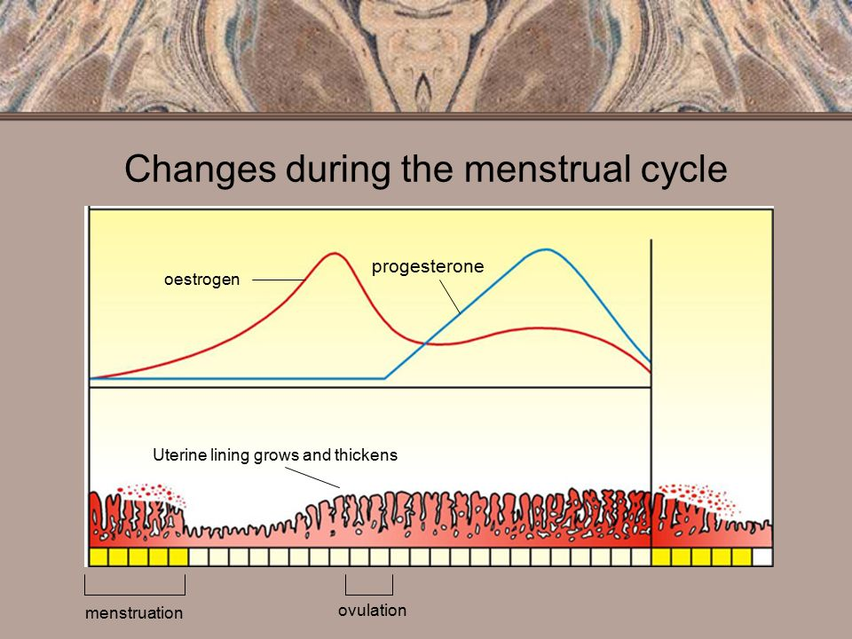 Influence of the Normal Menstrual Cycle on Vaginal