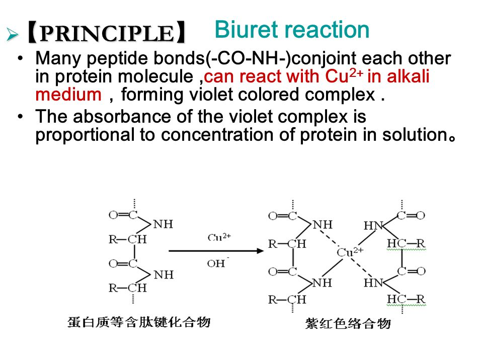 quantitative determination of protein concentration using The biuret test (piotrowski's test) is a chemical test used for detecting the  presence of peptide  the biuret reaction can be used to assess the  concentration of proteins because peptide bonds occur with the same frequency   in the biuret protein assay, a colorimetric test used to determine protein  concentration by uv/vis.
