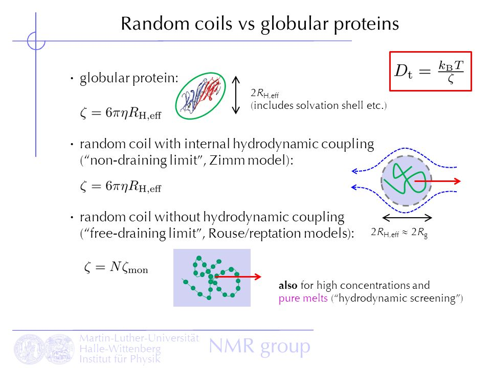 Examples of globular proteins