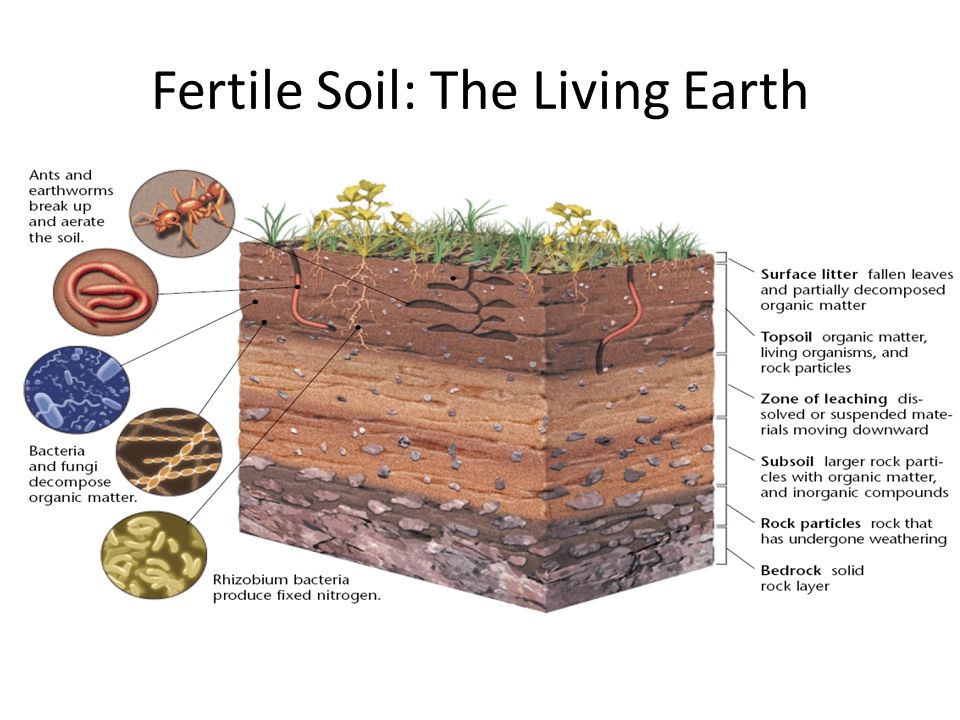 Ppt video online download for Is soil living