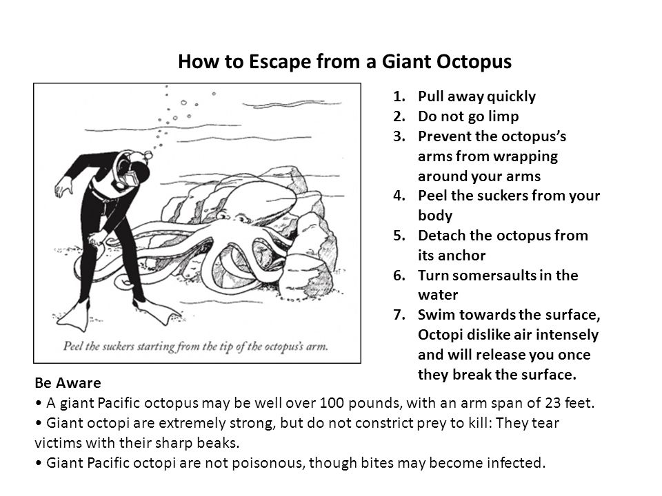 How to Escape from a Giant Octopus