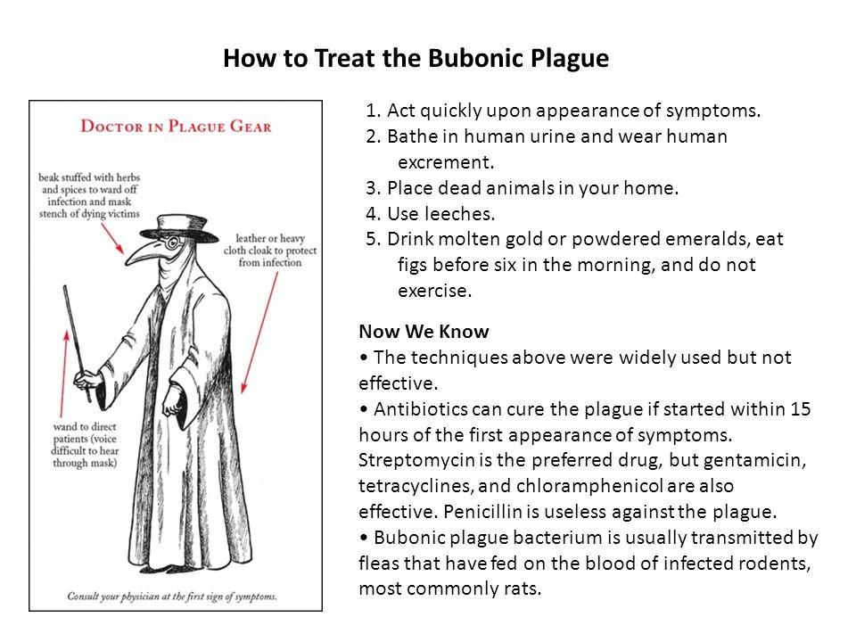 How to Treat the Bubonic Plague