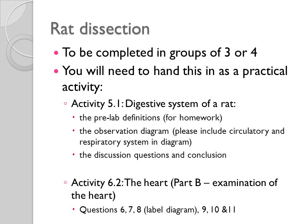 ENERGY AND NUTRIENTS FOR LIFE ppt video online download – Rat Dissection Worksheet