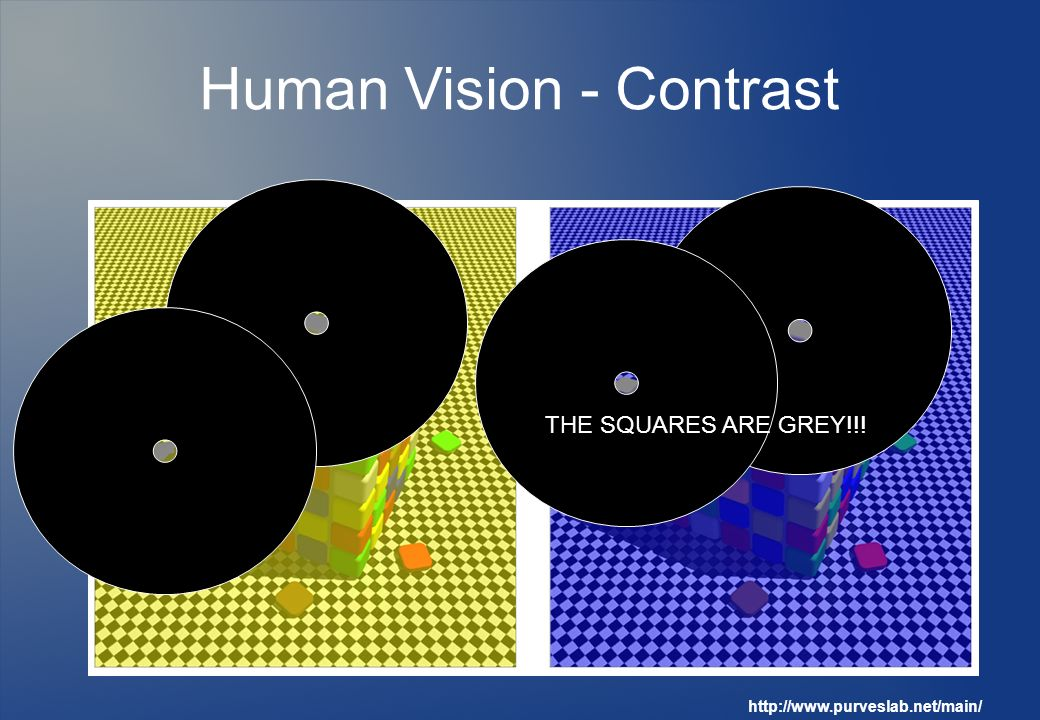 Human Vision - Contrast