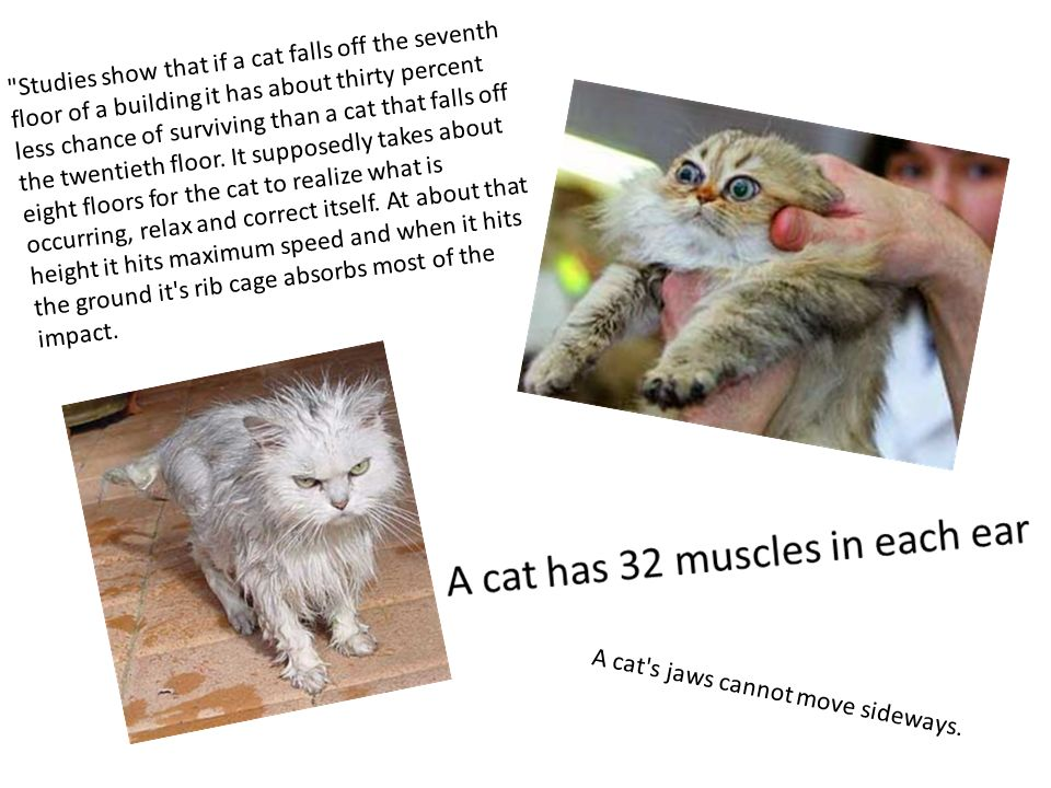 Studies show that if a cat falls off the seventh floor of a building it has about thirty percent less chance of surviving than a cat that falls off the twentieth floor. It supposedly takes about eight floors for the cat to realize what is occurring, relax and correct itself. At about that height it hits maximum speed and when it hits the ground it s rib cage absorbs most of the impact.