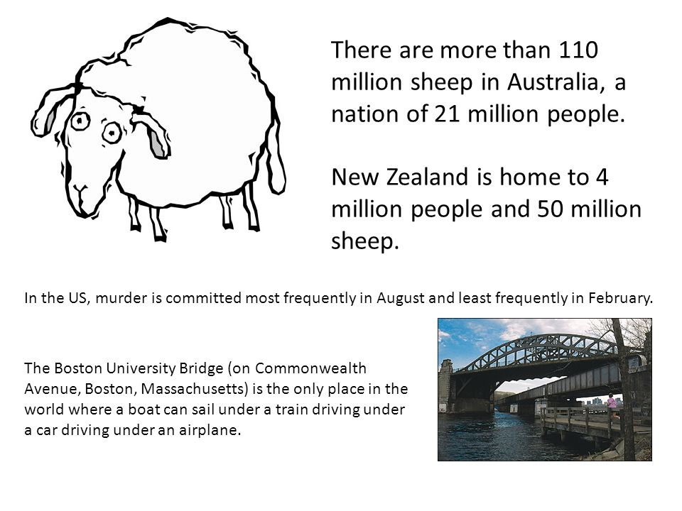 New Zealand is home to 4 million people and 50 million sheep.