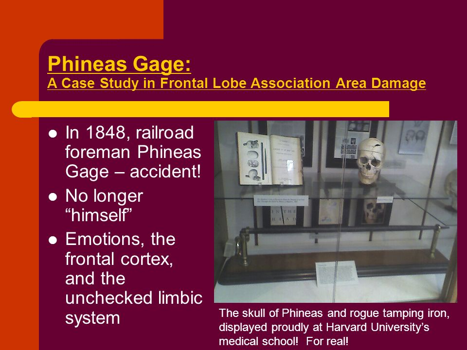 phineas gage 3 essay On sept 13, 1848, at around 4:30 pm, the time of day when the mind might start wandering, a railroad foreman named phineas gage filled a drill hole.