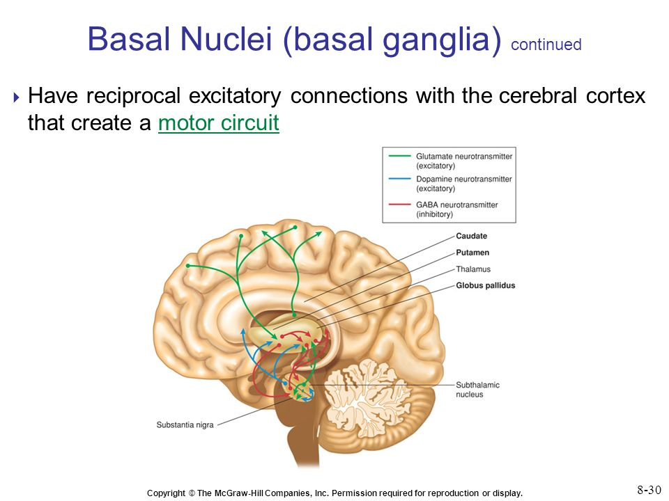 Brain Anatomy The 4 Lobes Structures and Functions