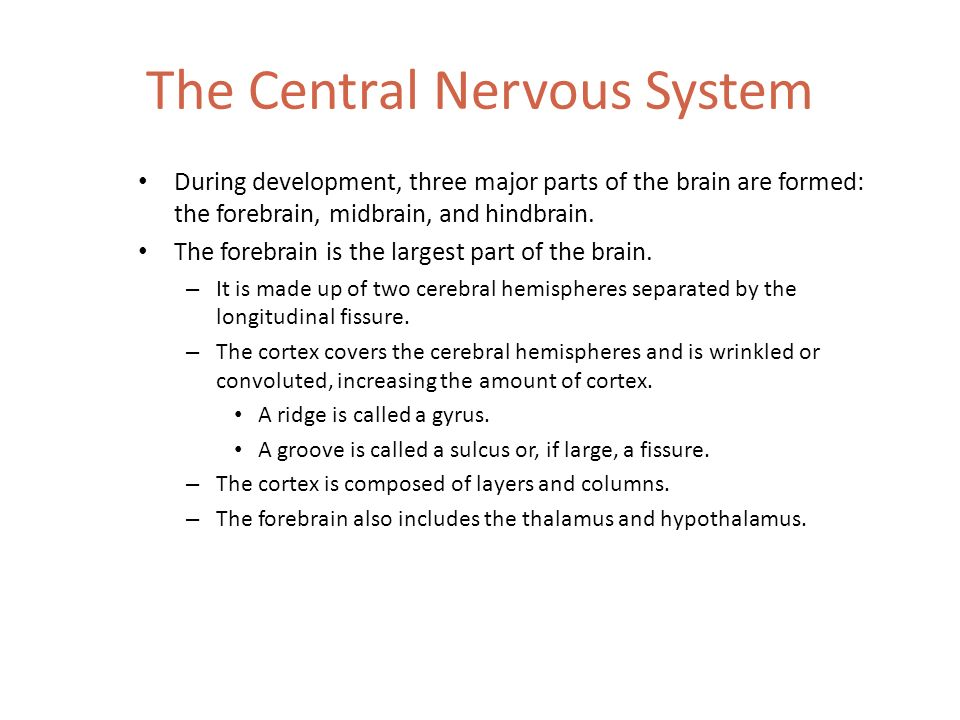 The Functions Of The Nervous System Chapter 3 Ppt Video Online