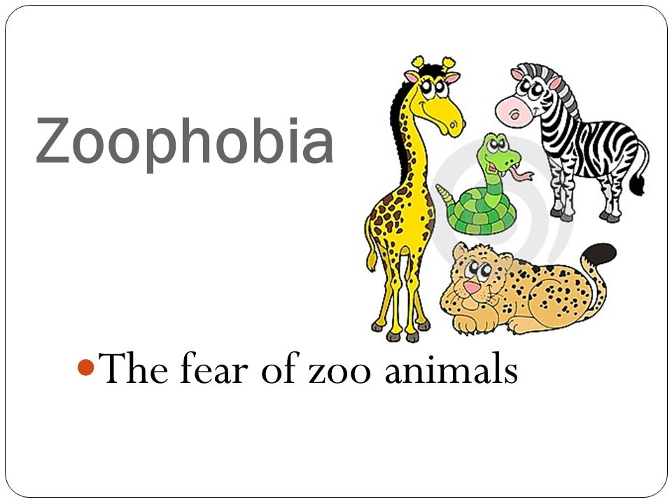 Zoophobia The fear of zoo animals