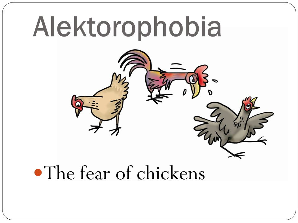 Alektorophobia The fear of chickens
