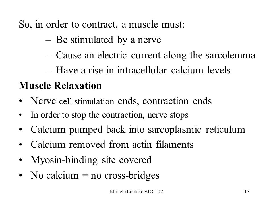 The Muscular System rev ppt download