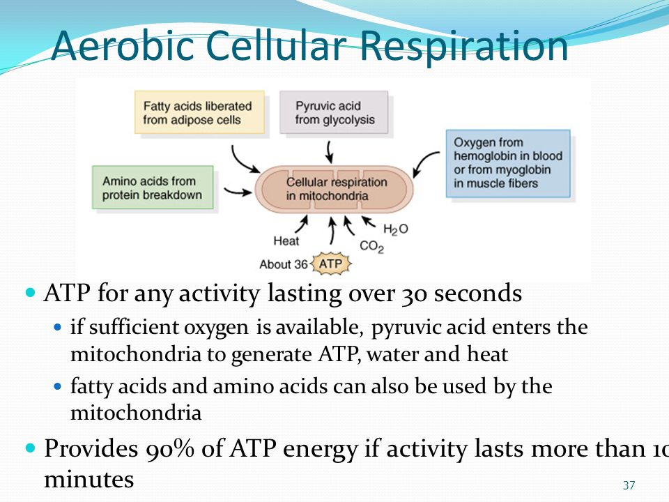 Chapter 10 Muscle Tissue Alternating contraction and ...