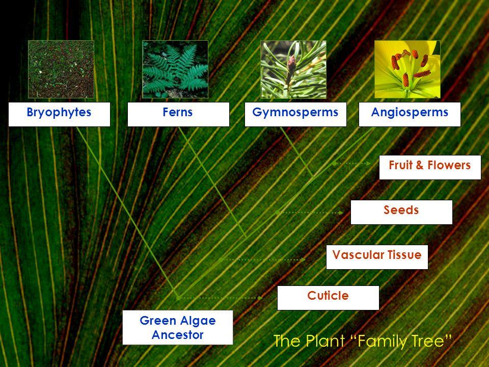 The Plant Family Tree