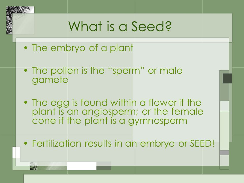 What is a Seed The embryo of a plant