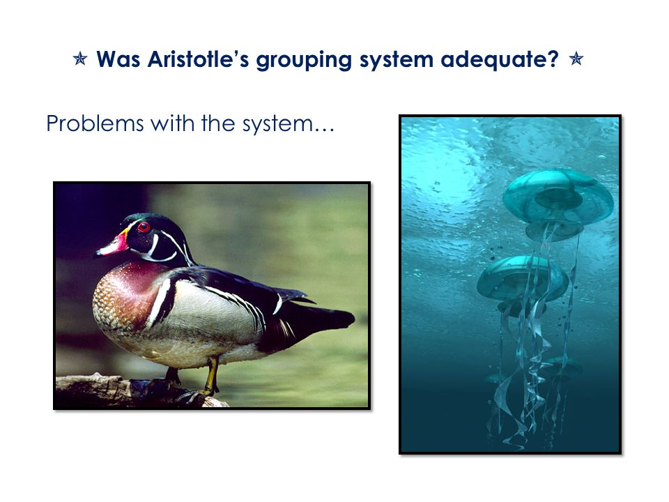  Was Aristotle's grouping system adequate 