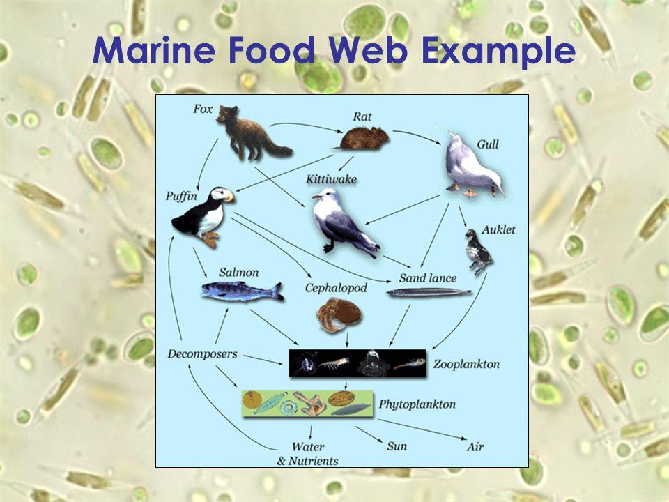 Marine Food Web Example
