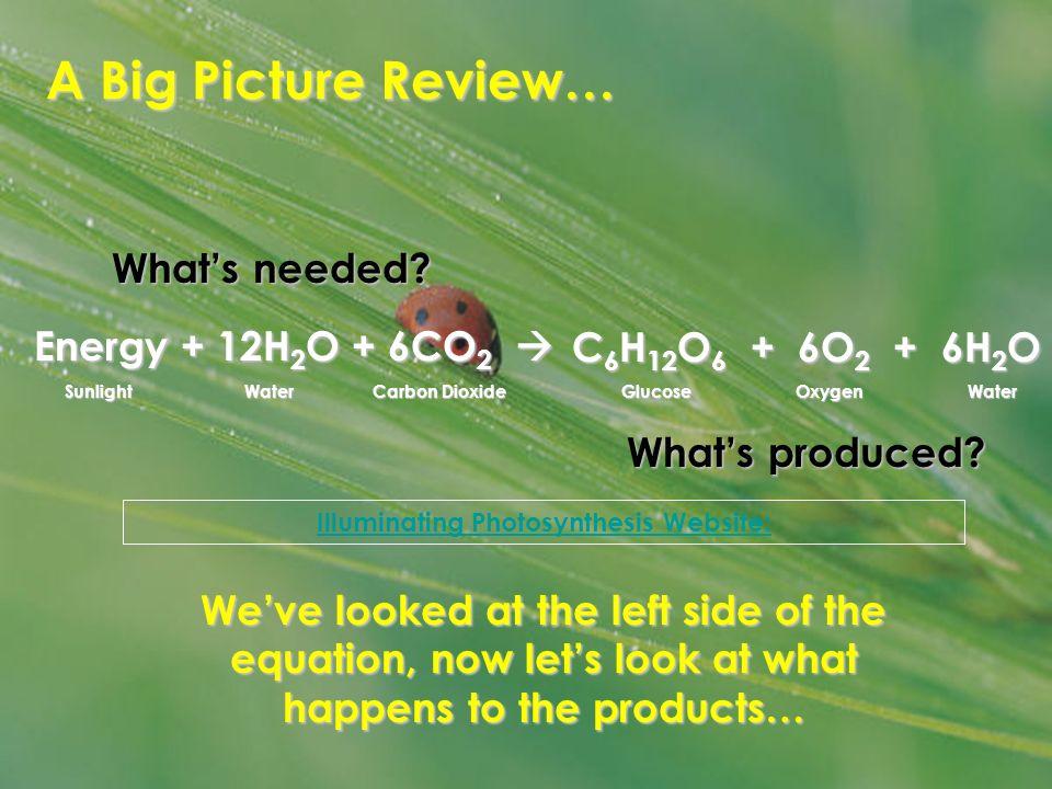 Illuminating Photosynthesis Website: