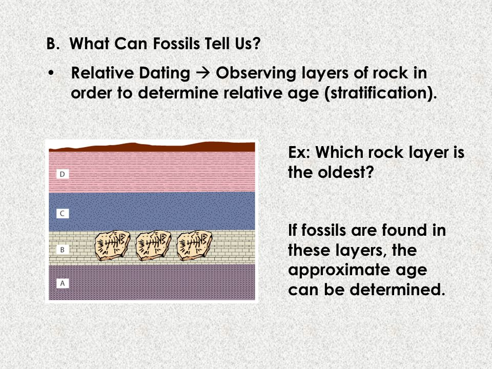 B. What Can Fossils Tell Us